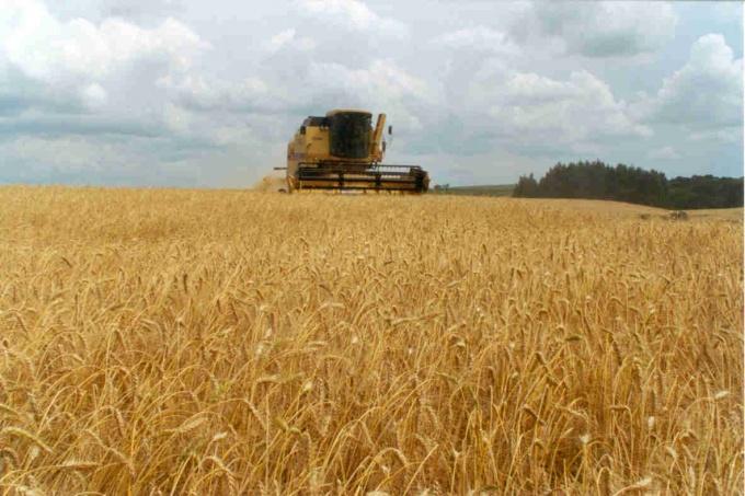 AGRO: Informe sobre cosecha fina