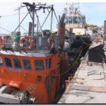 PESCA: Los desembarques de langostino cruzaron la línea de las 212 mil toneladas