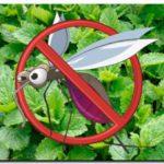 VERANO 2018: 6 plantas contra los mosquitos