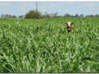 AGRO: El Gobierno muy cerca de bajar las retenciones a la soja y la carne