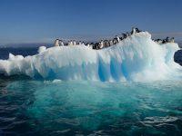 ECOLOGÍA: La Antártida se derrite