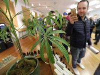 FALLO: Cannabis garantizado