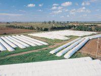AGRO: La industria de silobolsas facturará u$s 550 millones por la cosecha récord