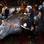 EL MUNDO: Japón reanudará la caza comercial de ballenas