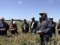 AGRO: Molineros brasileños vinieron a ver el trigo de la región