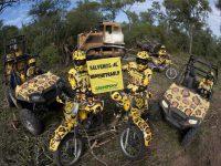 ECOLOGÍA: Salvemos los bosques del Chaco