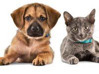 CUIDADO: Prohiben productos veterinarios