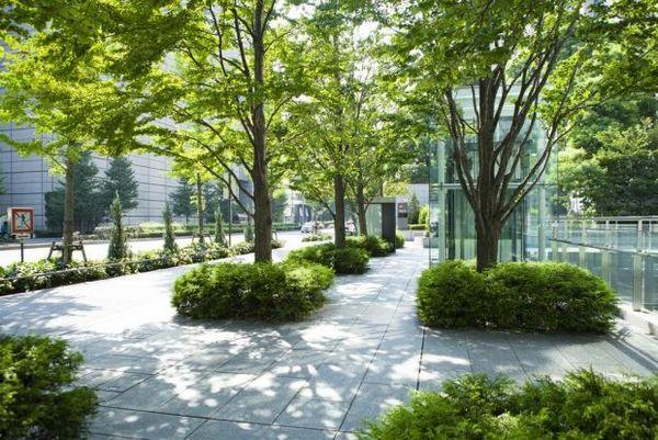 PLANEAMIENTO: Las ciudades deben pensar en los árboles como infraestructura de salud pública