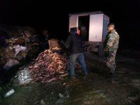 Incautaron 2500 kilos de pescado no apto para consumo en la ruta 228