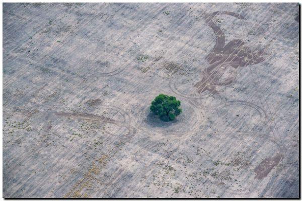 BOSQUES: Se perdieron 6,5 millones de hectáreas en Argentina
