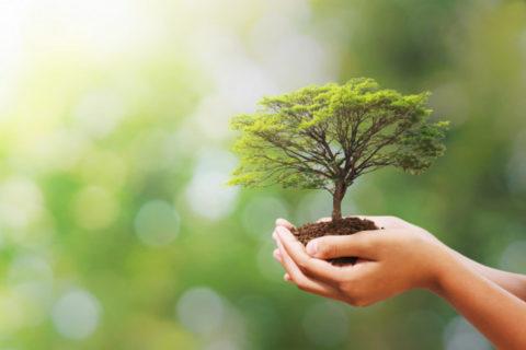 CUMBRE: Los líderes mundiales hablarán de naturaleza