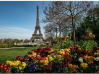 El turismo internacional podría caer hasta un 80% este año