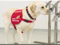 Los perros que detectan cáncer