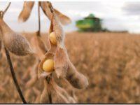 ¿Biodiésel de soja con efectos negativos?