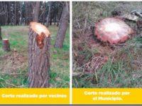 DEFORESTACIÓN DEL PARQUE: Reunión en el Concejo Deliberante