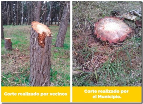 Aclaración sobre cortes de árboles en el Parque