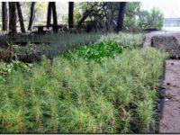 Quejas de ONG's y reforestación del Parque Lillo
