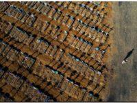 BRASIL: Superó 110 mil muertos en 5 meses