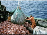 PESCA: Cierran la temporada de calamar